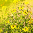 Stock Photo: Open yellow daisy close up