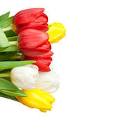 Fresh tulips isolated on a white — Stock Photo