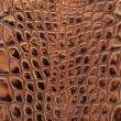 Crocodile leather texture background — Stock Photo