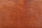 Reptile leather texture background — Stock Photo