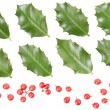 Holly leaves and berries collection — Stock Photo #37337747