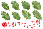 Holly leaves and berries collection — Stock Photo