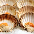 Stock Photo: Scallops 2