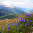 Stock Photo: Violet in Val Pusteria, Dolomite - Italy