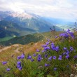 Violet in Val Pusteria, Dolomite - Italy — Stock Photo