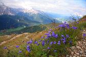 Violet in Val Pusteria, Dolomite - Italy — Stock Photo