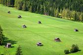 Green pastures - Sexten - Italy — Stock Photo