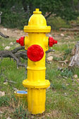 Image of a yellow fire hydrant — Stock Photo