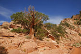 Parco nazionale del grand canyon (south rim), arizona - usa — Foto Stock