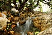 Small Water Cascades — Stock Photo