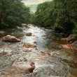 Mountain stream in spring - Scotland — Stock Photo #35595201