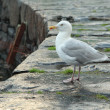 Stock Photo: Seagull on pier