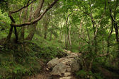 Forest in Scotland — Stock Photo