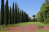 Cypress avenue — Stockfoto