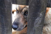 Dog behind a fence — Stock Photo