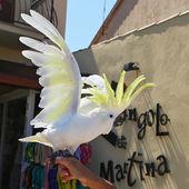 Yellow Cockatoo (Cacatua sulphurea) — Stock Photo