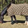 Horse with cover — Stock Photo