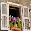 Old window with flowers — Foto de stock #30156199