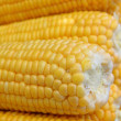 Grains of yellow ripe corn — Stock Photo