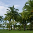 A different size of coconut trees — Stock Photo