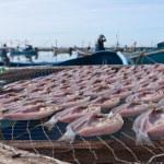 Dried fish under sun — Stock Photo #12790126