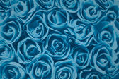 Rose texture blue background — Stock Photo
