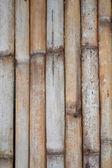 Bambus tło — Zdjęcie stockowe