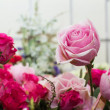 Pink rose bouquet close up background - Stock Photo
