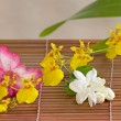 Oncidium and desert rose flower — Stock Photo