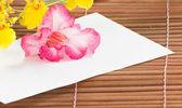Paper and desert rose — Stock Photo