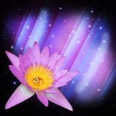 Water lily group on expandable ster dust background — Stock Photo