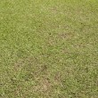 Natural green grass texture — Stock Photo
