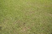 Natural green grass texture — Stock Photo