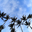 Coconut palm tree over blue saky — Stock Photo