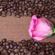 Coffee beans frame and pink rose  — Stock Photo