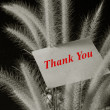 Thank you text on paper pad with flower foxtail weed on black background — Photo