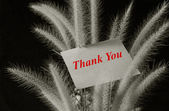 Thank you text on paper pad with flower foxtail weed on black background — Stock Photo