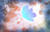 Cosmos flower with watercolor splash — Stock Photo