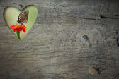 Hole of heart shape with Zinia flower and butterfly on grunge wood background — Zdjęcie stockowe