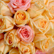 Beautiful yellow and pink roses background — Stock Photo