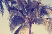 árbol de palma de coco — Foto de Stock