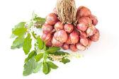 Cebolla y albahaca — Foto de Stock