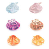 Scallop seashells — Stock Photo