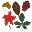 Set of Autumn Leaves — Stock Photo
