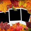 Blank photos in autumn leaves - Stock Photo