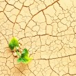 Plant sprouting in desert — Stock Photo #32621521
