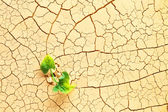Plant sprouting in the desert — Stock Photo
