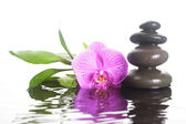 Flower and stones in water — Foto Stock