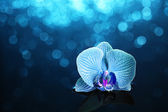 Orchid in water with lights — Stock Photo