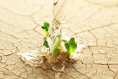 Watering a plant sprouting in the desert — Stock Photo